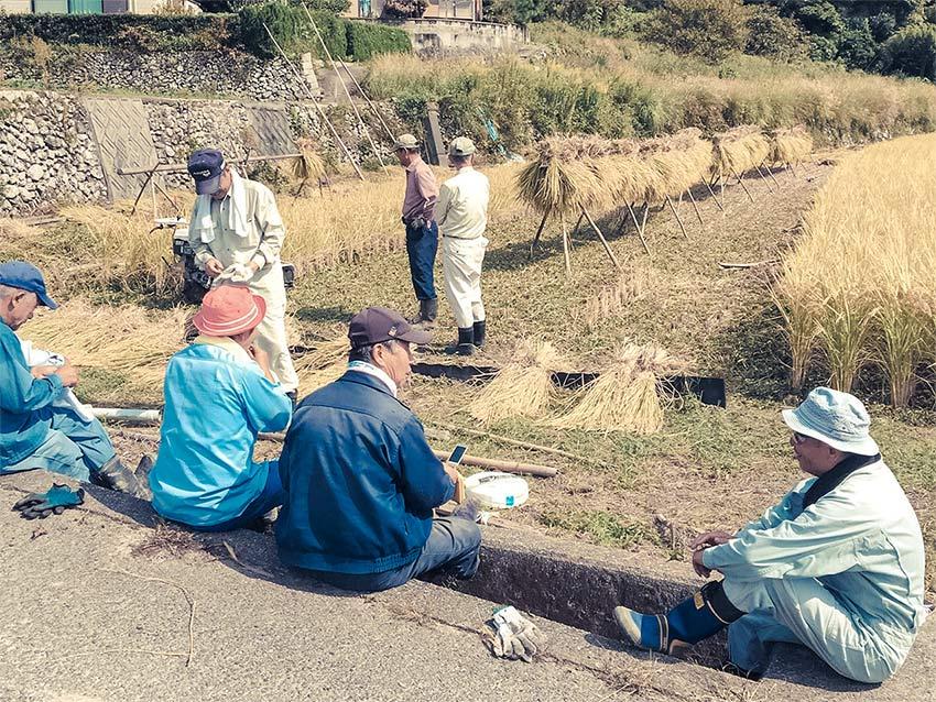 富海の野菜づくり